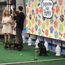 My foster dog pooped on national television this morning Happy national puppy day
