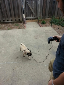 My friend couldnt find a leash for his dog We improvised