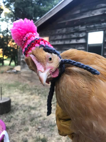 My friend got hats for her moms chickens