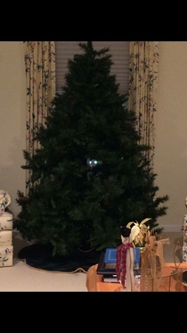 My friend hadnt even gotten the chance to decorate her tree before the cat claimed it