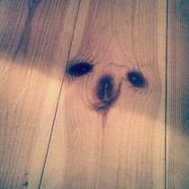 My friend has a sloth on his wooden floor