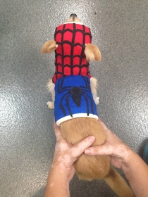 My friend is a Vet Tech and had some extra time on her hands while bandaging up a dog today