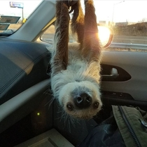 My friend is a zookeeper This is one of her friends hanging out in her car on her break