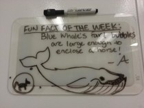 My friend is banned from the wipe board at work