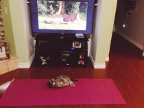 My friend left her cat alone with the yoga equipment