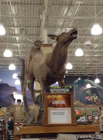 My friend took this picture at Cabelas All it takes is the right angle