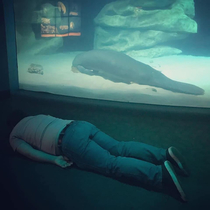 My friends cousin visited the aquarium today