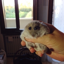 My friends hamster looks like a cartoon