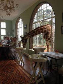 My friends on a trip in Africa She sent me this picture saying Look who joined us for breakfast