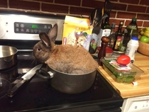 My girlfriend left her bunny with me while she was visiting her mom for Spring break She has no clue how much I like rabbit roast