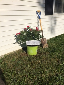 My girlfriend offered to mow my lawn Dont mow down my rose this time I asked Came home to this