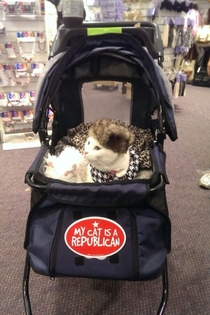 My girlfriend took a picture of this cat wearing a fur hat in a stroller at her work and sent it to me
