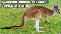 My Girlfriends Take on Kangaroos