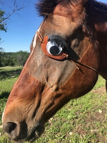 My horse had his eye removed so I made him an eye patch