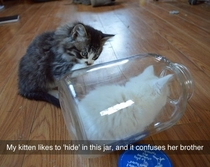 my kitten likes to hide in a jar