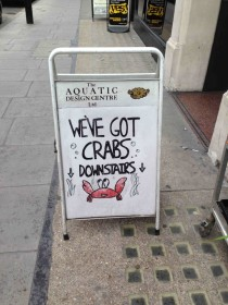 My local Aquariums twisted sense of humour