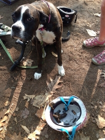 My moms friend went camping a while ago This is what their dog did