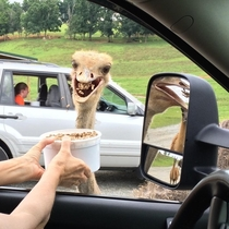 My mother-in-law met this enthusiastic fellow at a Virginia safari park last weekend