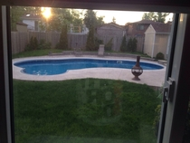 My mother thinks our pool looks like a kidney