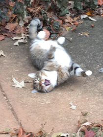 My neighbor found our cat while they were raking their leaves And this is the face he gave them for a photo