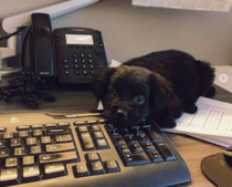 My new co-worker is totally useless