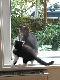 My new kitten just met the cat next door who seems to want to harvest her soul