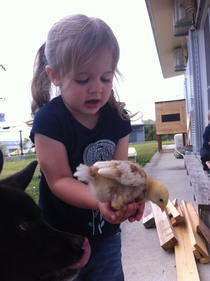 My niece about to accidentally feed this chick to my dog x-post - raww didnt appreciate imminent death