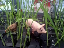 My office mate was on holidays I thought Id plant him a garden