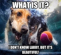 My only thoughts after seeing the dogs underwater post