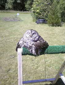 My owl melted what how should I deal with it