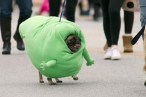 My Pug Marching as Slimer in the Spooky Pooch Parade