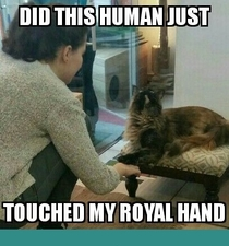 My royal hands