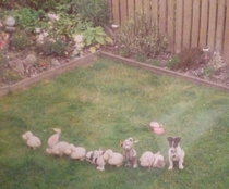 My sister lined up my dads garden ornaments to annoy him her dog thought he was one of them