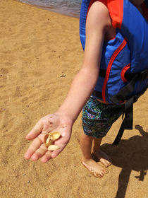 My son found sea shells on his first trip to the beach I didnt have the heart to tell him
