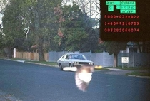 My states police facebook page posted this picture taken by a speeding camera Bird Bro saves the day