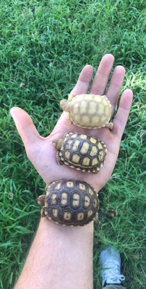 My tortoise printer ran out of toner