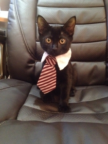 My very own business cat leave him alone he is very busy right meow