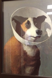 My vet has the best portrait at his office Sorry for the glare