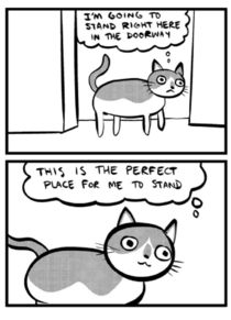 My wife and I recently welcomed a cat into our lives This sums up our experience so far