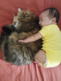 my wife told me that baby is happy with our cat