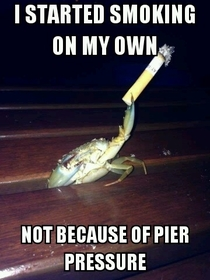 Nautical Pun Crustacean wont be a thing but who cares