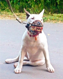 Neighbor says your dog is scary and needs a muzzle Not a problem