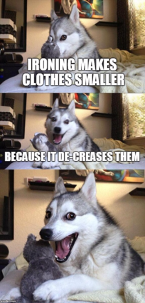 Never enough pun joke dog