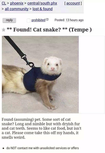 Never forget cat snake