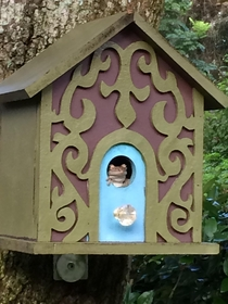 New tenant moved into the birdhouse this AM