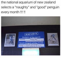 New Zealand aquarium has monthly naughty and good penguins