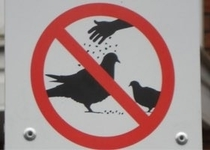 No bird seasoning