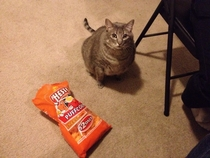 No kitty those are MY cheesy poofs