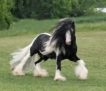 No this is the fabio of horses