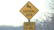 Oh deer Be careful out there